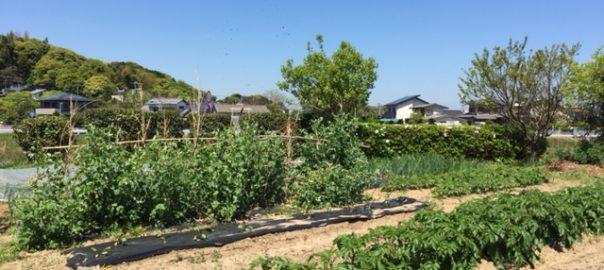 オンガ第二菜園